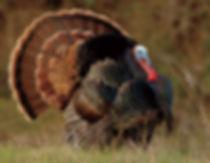 NRA Wild Turkey Hunter Clinic NY
