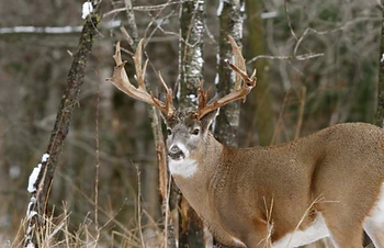 NRA Whitetail Deer Hunter Clinic NY