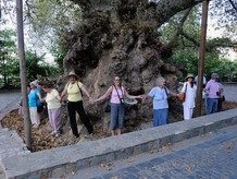 Women Encircle Two Thousand Year Old Plane Tree at Krasi