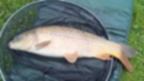 stone bridge lake good fish.jpg