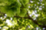 oak-2374231_1920.jpg