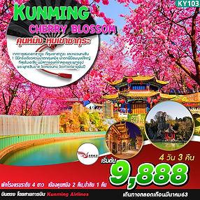 38.KY103_Kunming Cherry Blossom 4D3N.jpg