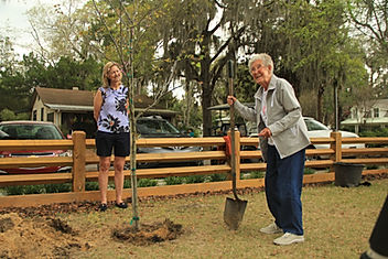 Miss Norma planting a memorial tree in Bluffton, South Carolina