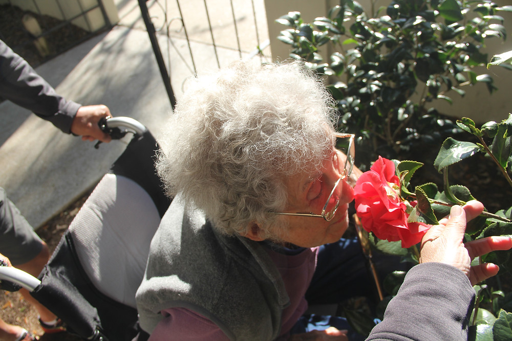 Miss Norma in wheelchair smelling a red rose