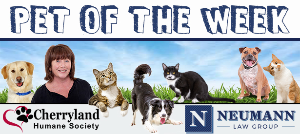Pet of the Week copy