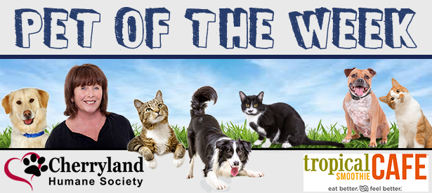 Pet of the Week Tropical Smoothie  Cafe.