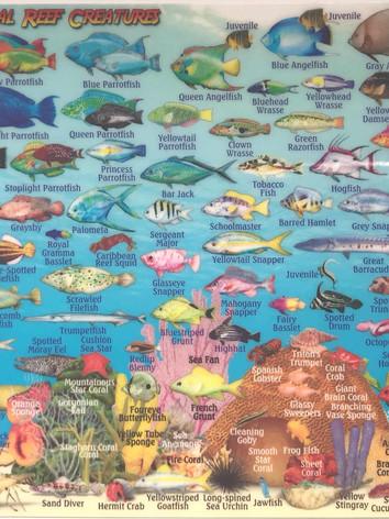 Bonaire reef creatures