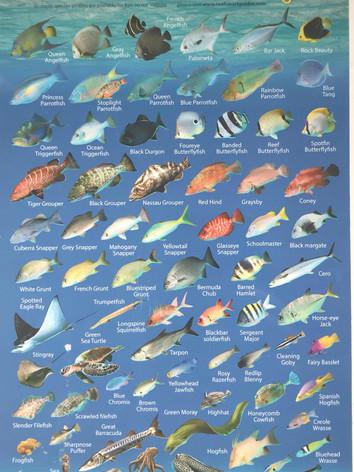 Bonaire reef creatures 2