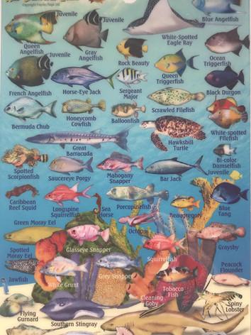 Reef creatures 1