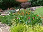 backyard garden.jpeg