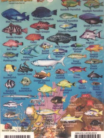 Reef creatures 2