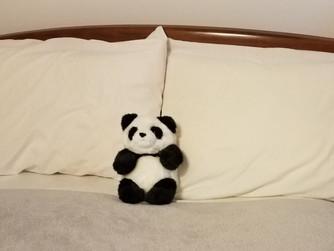 """""""Panda""""mania"""