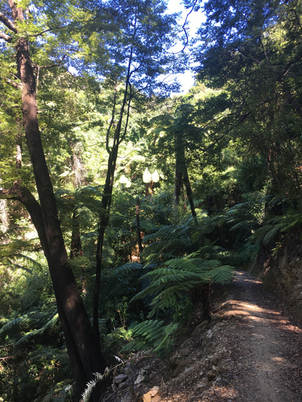 Bush walk in the Marlborough Sounds