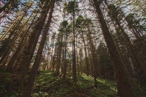 Hike-LakeStewart (18 of 30).jpg
