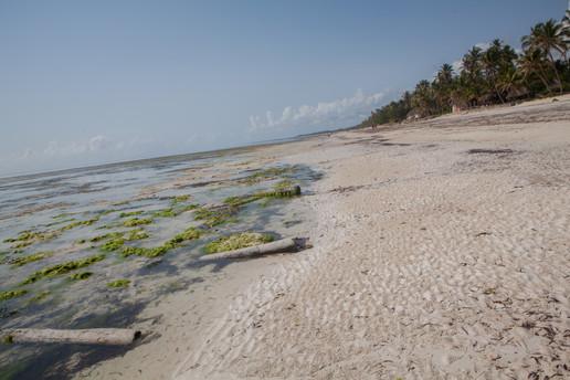 Kenya+Zanzibar2017-5_-227.jpg