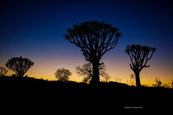 Namibia Quier Tree Forest Sunrise