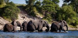 LLT Boteti Elephant Chain