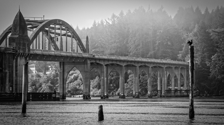 Siuslaw Bridge with cormorant