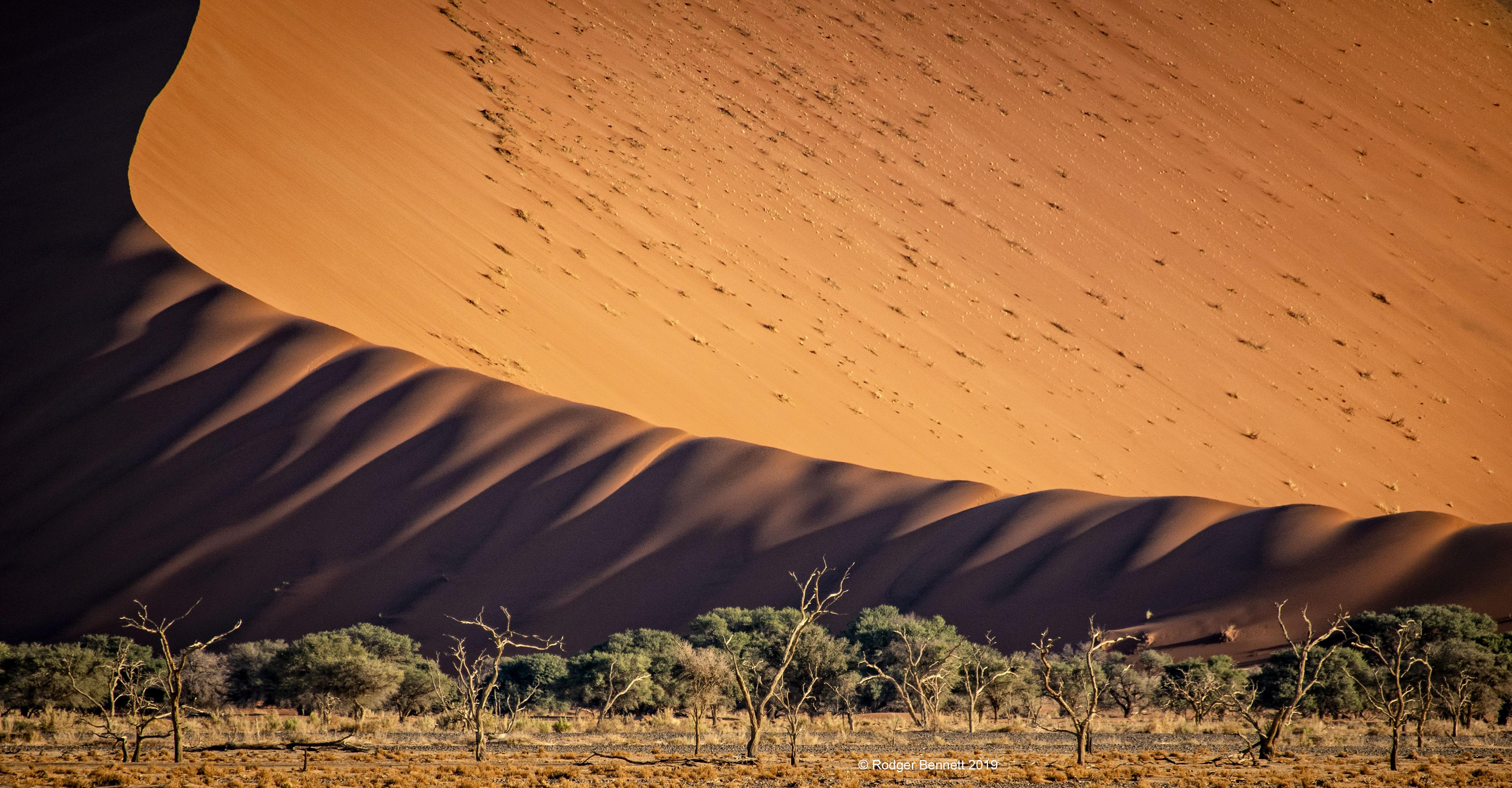 Namibia dune caterpillar