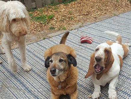 Shirley's New Family
