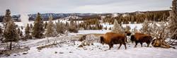 Paint Pots bison horizon