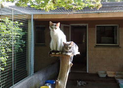 box gatti