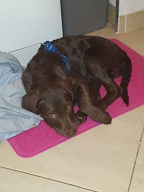 adozione cane astad sisma