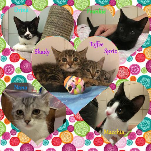 Gattini, gattini e ancora gattini! Tutti in cerca di una nuova casa!