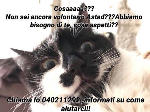 A.A.A. Volontari Cercasi!!!