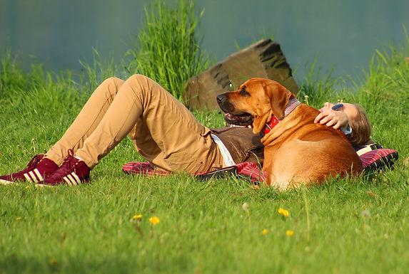 Tagesseminar Stressbewältigung für Mensch und Tier