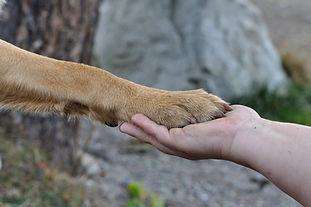 Tagesseminar «Kommunikation Mensch / Tier / Natur»