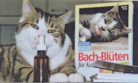 Zweitages-Seminar «Bachblüten und Farben für Tiere»