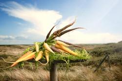 Natasja Verschoor Carrots