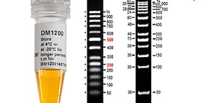 [DM1200] AccuBand™ 50 bp DNA Ladder II, 500 μl