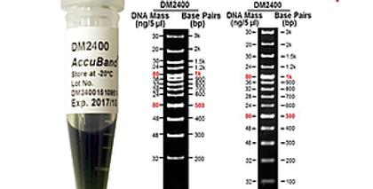 [DM2400] AccuBand™ 100 bp+3K DNA Ladder II, 500 μl