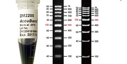 [DM2200] AccuBand™ 100 bp DNA Ladder II, 500 μl