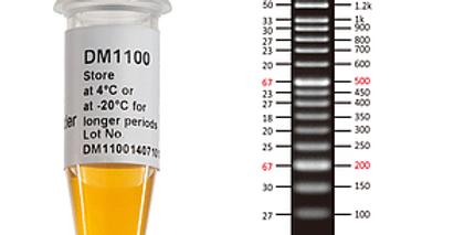 [DM1100] ExcelBand™ 50 bp DNA Ladder, 500 μl