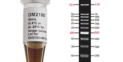 [DM2100] ExcelBand™ 100 bp DNA Ladder, 500 μl