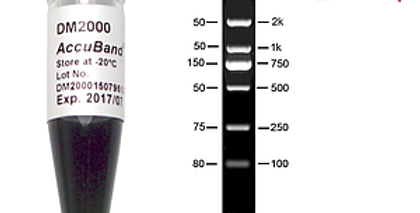 [DM2000] AccuBand™ 100 bp DNA Marker II, 500 μl