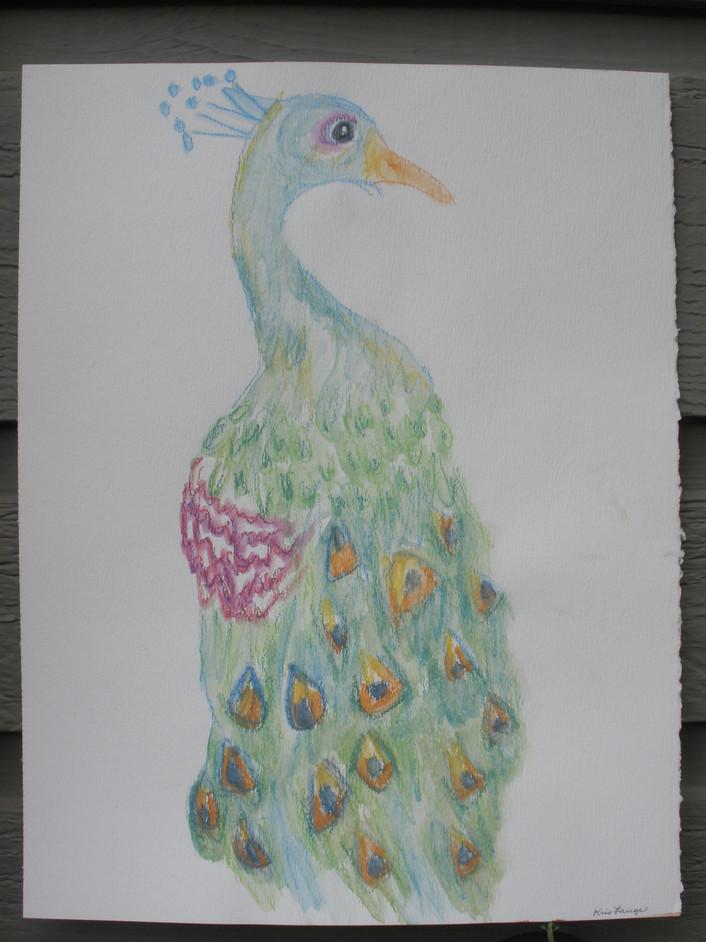 Peacock in Watercolor Paper