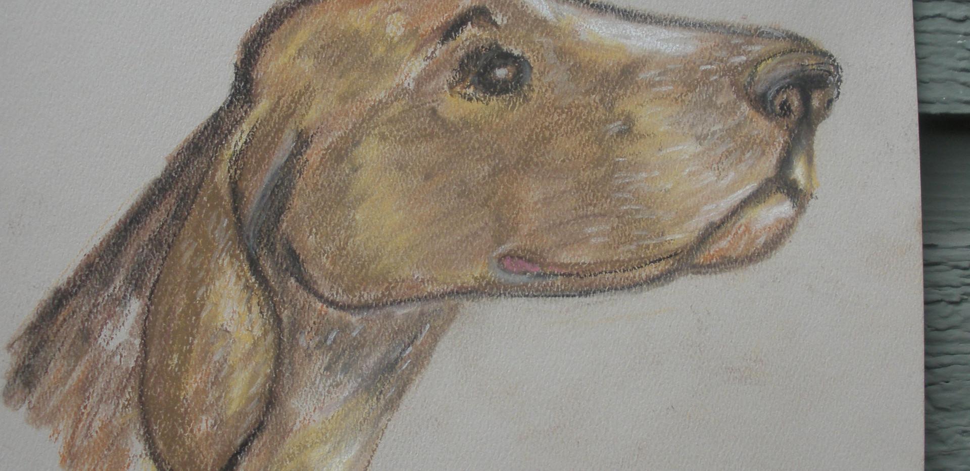German Shorthair Pointer Soft Pastel Painting