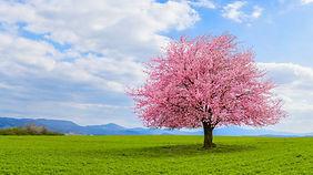 baumblüte.jpg