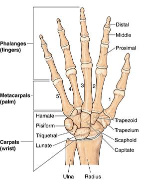 Wrist Pain, Hand Pain