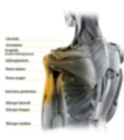 Shoulder Pain, Dr. Justin Chronister