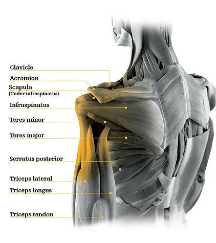 Shoulder Pain, Dr. Justin Chronister