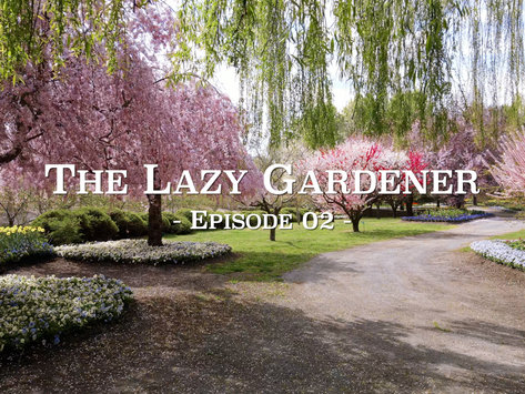 The Lazy Gardener Web Series - Episode 2 Trailer