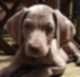 Dog/Puppy Sitting