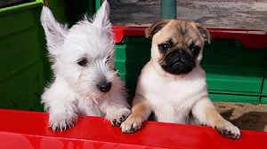 FREE Puppy Socialisation