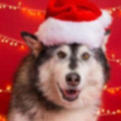 solo christmas.jpg