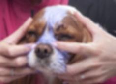 Dog Grooming Facial